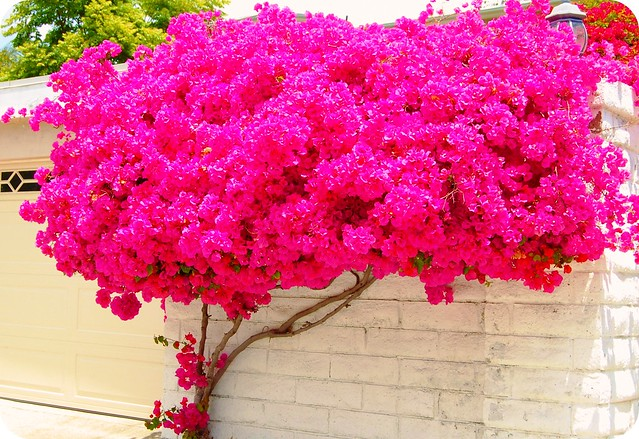 how to make petunia tree