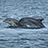 the Chanonry Point Dolphins group icon