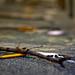 Small photo of Wish stick