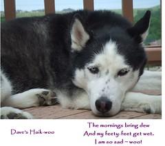 Dave's Haik-woo
