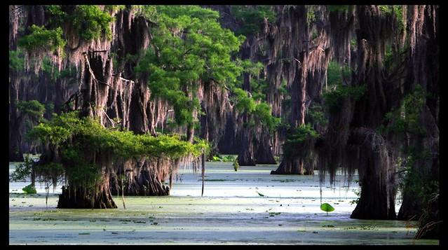 Swampest