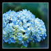 ...Something Blue by NatureWalk