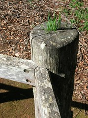 An old wooden post with grass growing out the top.