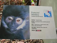 I can haz monkey?