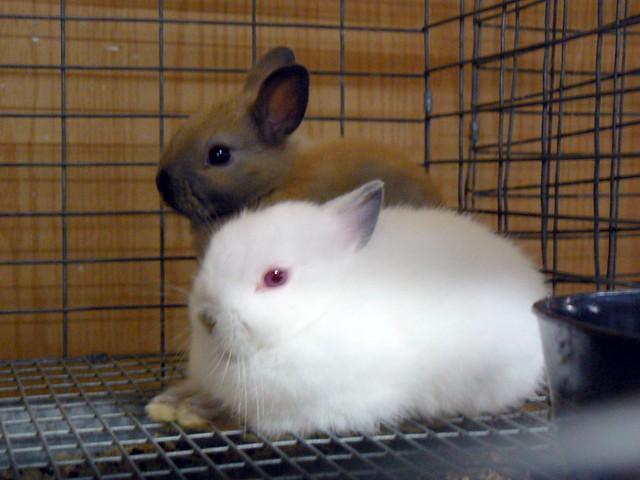 Rabbit siblings