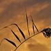 Reed at  Dawn by algo