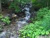 Mulmur Stream