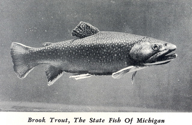 Michigan fishing state fish brook trout flickr photo for Fish in michigan