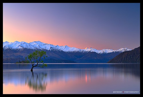 sunset newzealand mountains tree southisland lakewanaka mtaspiringnationalpark