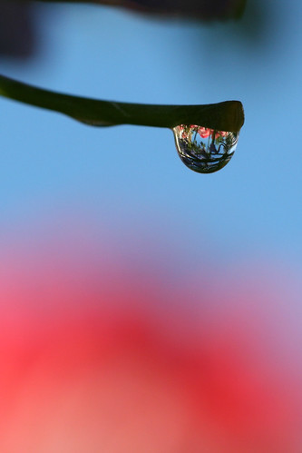 macro water photo waterdrop day explore the canonef100mmf28macrousm of canoneosdigitalrebelxti