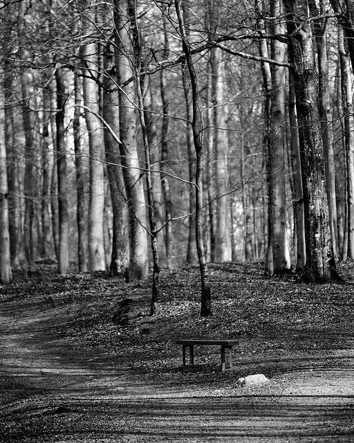 Bøkeskogen, Larvik