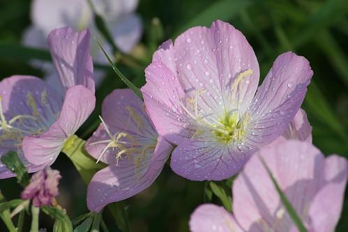 flower macro closehome