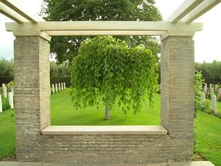 La finestra sull'albero della Speranza / The window on the tree of the Hope