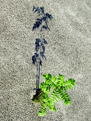 Sapling in Concrete