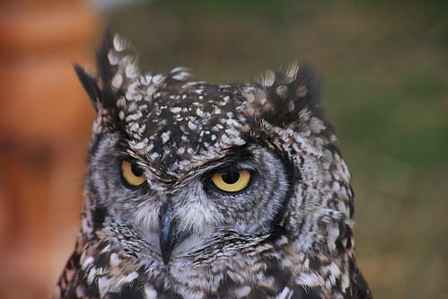 Owl be seeing you!