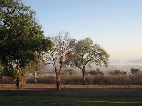 zimbabwe imbabala