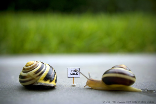 For Sale / For Snail