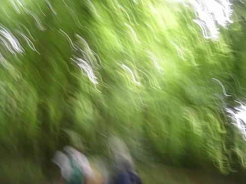 Through an impressionist wood