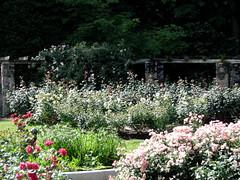 Rose Garden, Raleigh NC 6749