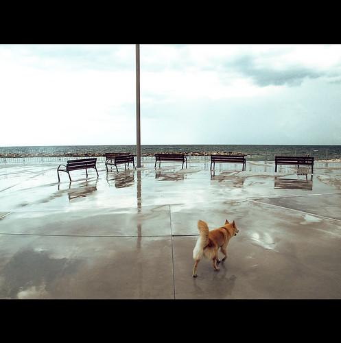 sea italy dog wet rain cane italia mare waterfront horizon cemento pioggia lungomare puglia frontside orizzonte panchine apulia assi bohigas moladibari assicartesiani