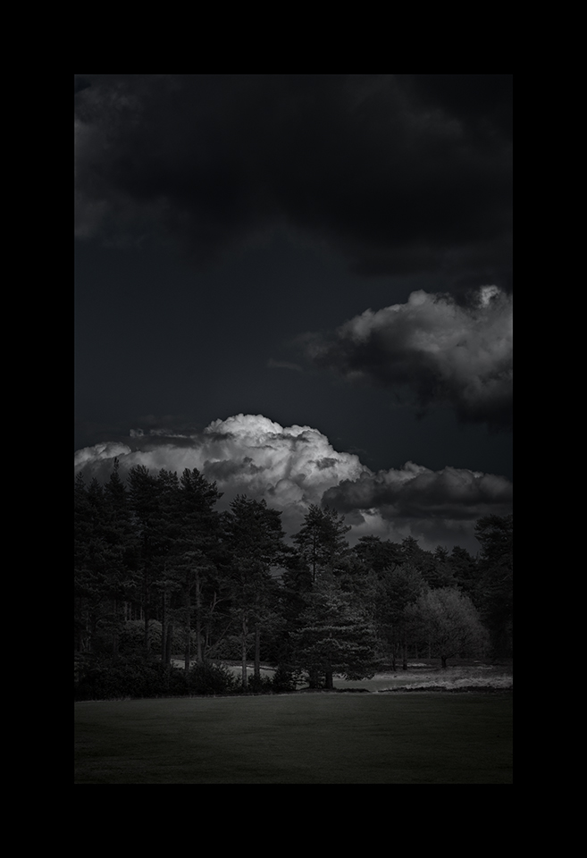 Cloudscapes: Cumulus amongst Trees by Nicholas M Vivian