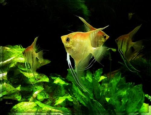 fish zoo aquarium schweiz switzerland basel vivarium basle zolli fische mywinners abigfave ruschie kunstplatzlinternational