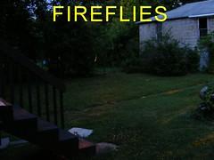 Fireflies 8