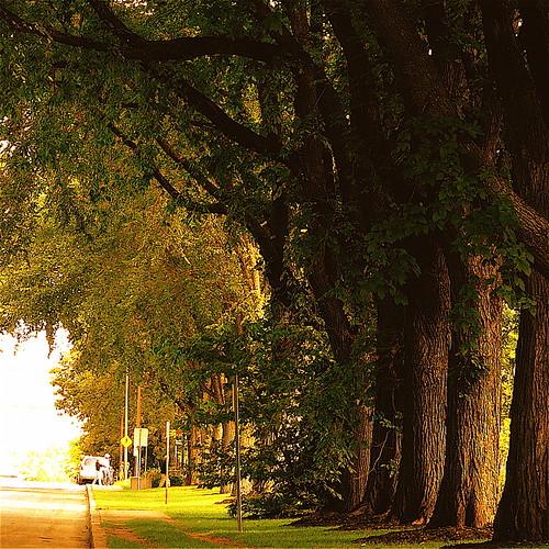 """park old morning light canada tree walking photography photo bravo photographie lumière photograph québec huge elm arbre parc marche ville orme matin photographe énorme vieillir superbmasterpiece """"deniscollette"""" """"québeccity"""" """"quebeccity"""" """"parcsaintejeanned'arc"""" """"villedequébec"""""""