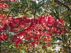 Autumn Colors Lake Crabtree NC 0444