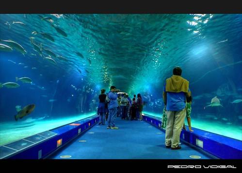 Valencia aquarium a photo on flickriver for Aquarium valencia precio