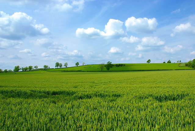 Simple Landscape | Explore DavidMartynHunt's photos on ... on Basic Landscaping  id=78785