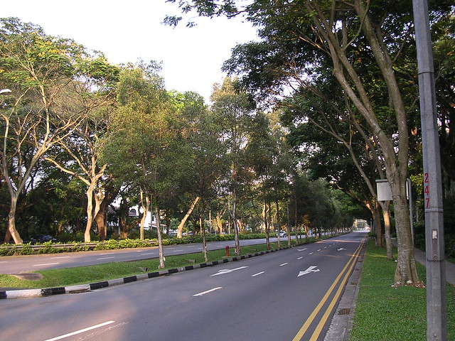 Bt Timah Road - Glam Trees (6)