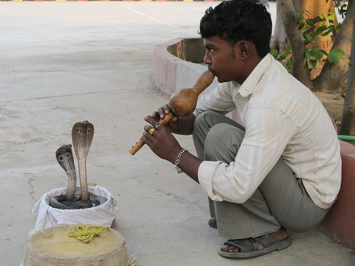 Snake charmer on the way to Delhi