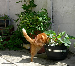Prevention of urinary crystals in cats and a little about