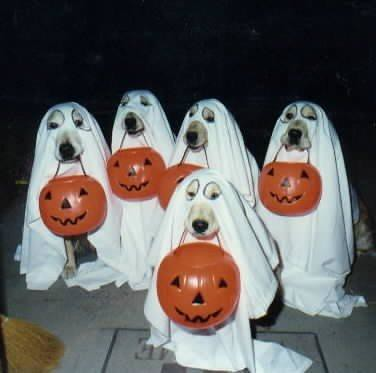 Dog Halloween Costumes by camplena