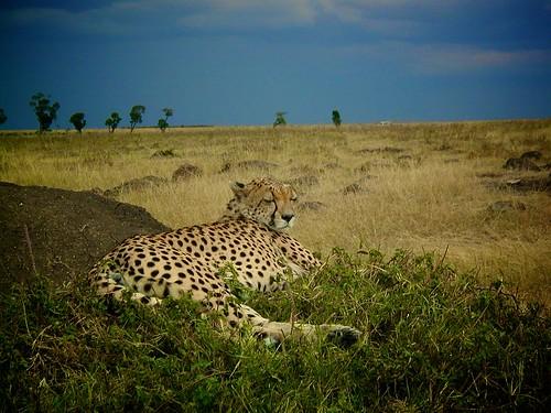 Kenya Photo Safari