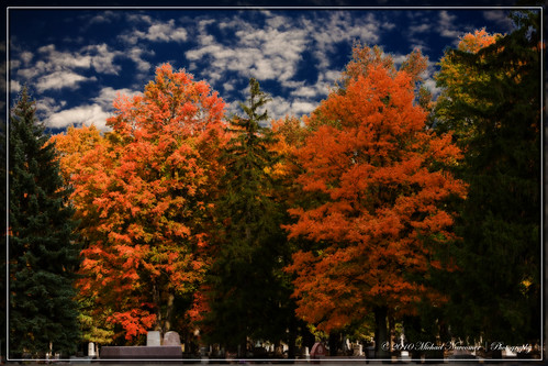 autumn fall fallfoliage foliage orton cobalt