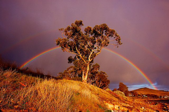Rainbow through Gum tree