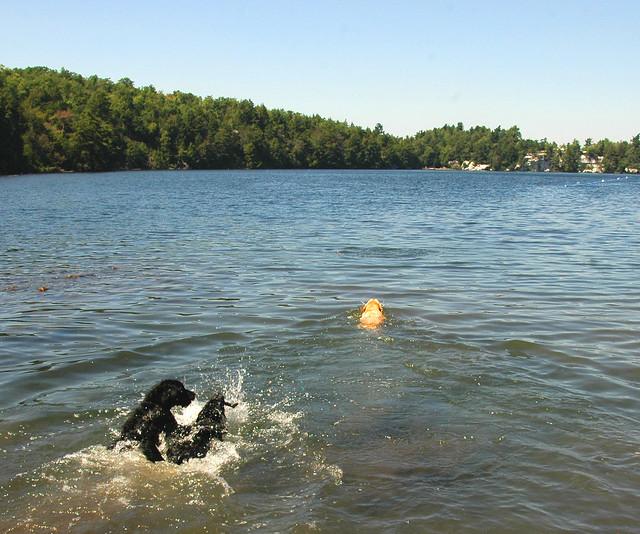 Splish Splash Dog Grooming Ossining