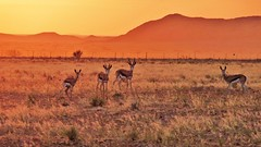adventure(0.0), grazing(0.0), vicuã±a(0.0), guanaco(0.0), impala(0.0), wildlife(0.0), animal(1.0), prairie(1.0), steppe(1.0), antelope(1.0), springbok(1.0), plain(1.0), herd(1.0), fauna(1.0), natural environment(1.0), landscape(1.0), wilderness(1.0), savanna(1.0), grassland(1.0), safari(1.0),