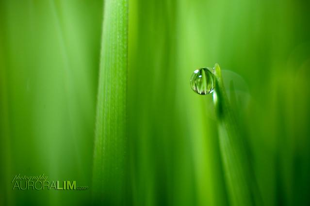 (4a) dewdrop - 01.04.09