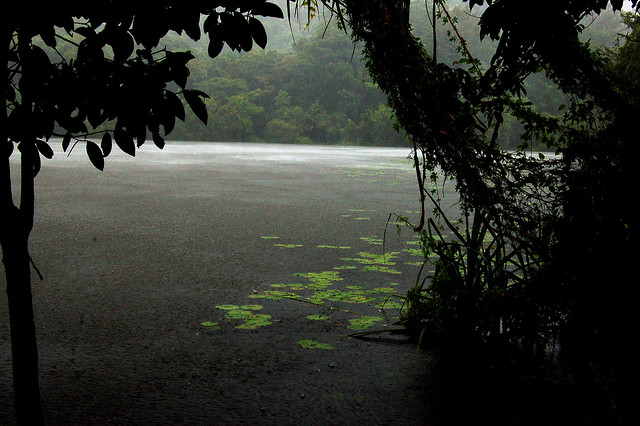 Monsoon  Kerala - Pookotte Lake