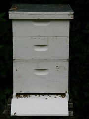 furniture, chest of drawers, insect, bee, beehive,