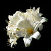 A White Bouquet to mark a four year milestone. by missnoma