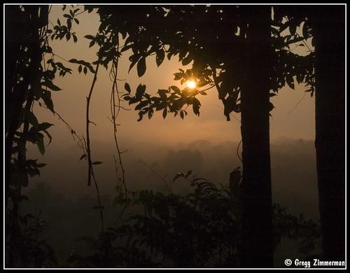 peru rain forest sunrise early amazon perú nikond50 jungle várzea amazonrainforest varzea madrededios terrafirme cicra dsc98412