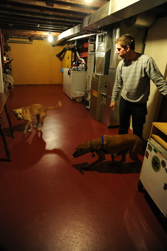 2 doggies, Maggie and Rosie with Maxwell on the newly painted red floor, basement, interior, house, Wedgwood, Seattle, Washington, USA by Wonderlane