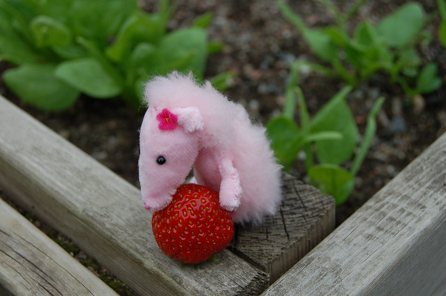 Strawberry hunt