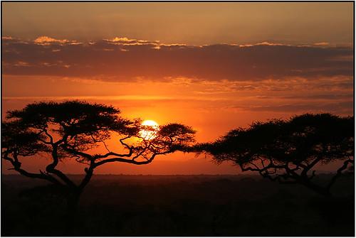 sunrise over serengeti - later