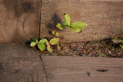 Growing in the steps