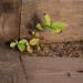 Unwanted Plants